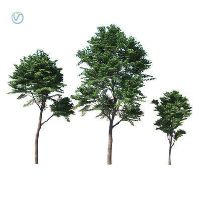 现代, 植物, 绿植, 树木