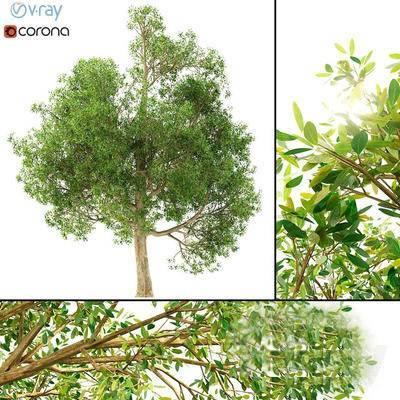2000套高精3D单体模型, 现代, 植物, 绿植, 树木
