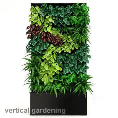 现代, 植物墙, 植物