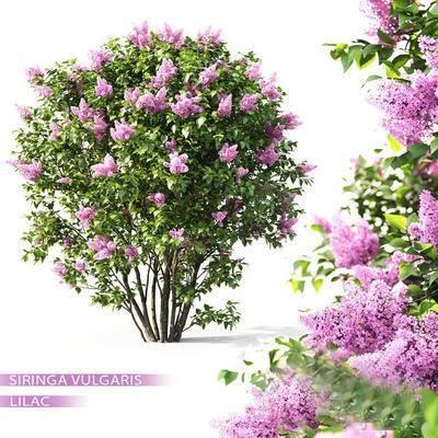 2000套高精3D单体模型, 现代, 灌木丛, 灌木, 植物, 绿植