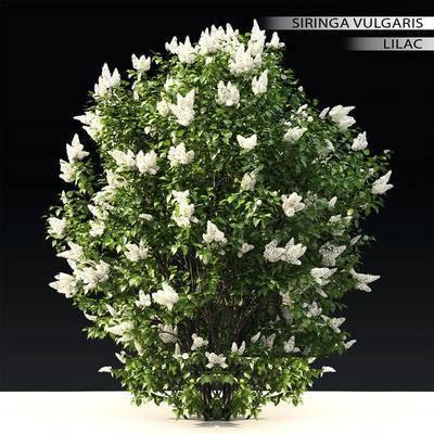 2000套高精3D单体模型, 现代, 灌木, 植物, 绿植