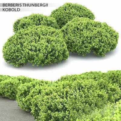 2000套高精3D单体模型, 现代, 灌木, 灌木丛, 植物, 绿植