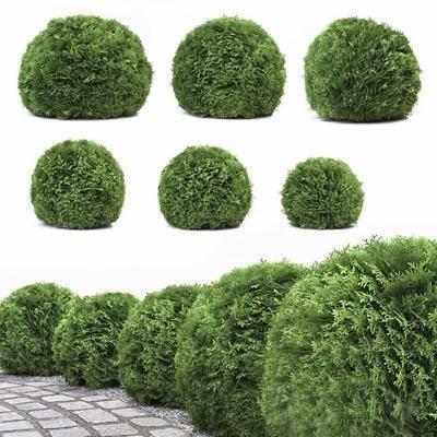 2000套高精3D单体模型, 现代, 植物, 绿植, 灌木