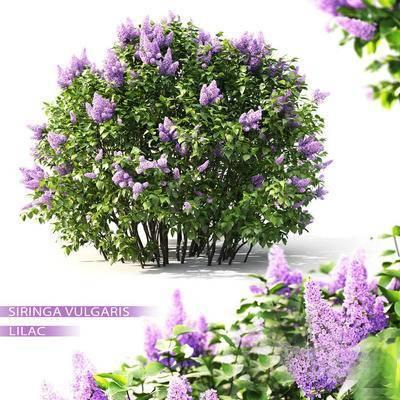 2000套高精3D单体模型, 现代, 植物, 灌木, 绿植