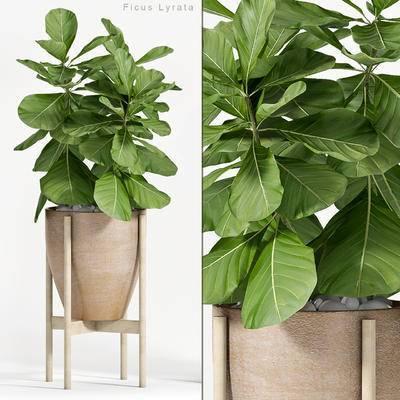 2000套高精3D单体模型, 现代, 盆栽, 植物
