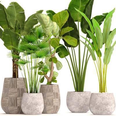 2000套国外模型, 现代, 盆栽, 植物, 绿植