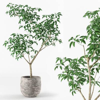 现代, 盆栽, 绿植, 植物
