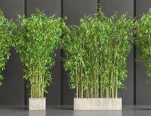 现代, 竹子, 植物