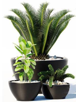 2000套国外模型, 现代, 盆栽, 绿植, 植物