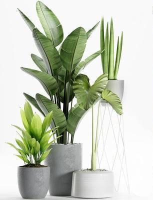 现代, 盆栽, 植物, 绿植