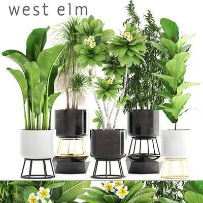 2000套国外模型, 现代, 盆栽, 绿植