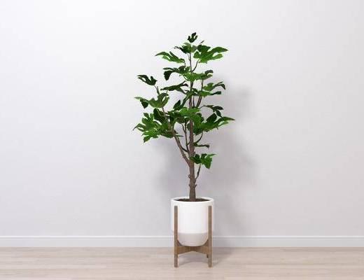 现代盆栽, 盆栽