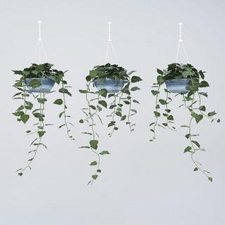 盆栽植物单体手绘