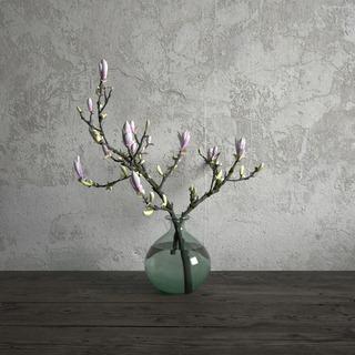 植物,盆栽,现代,花草