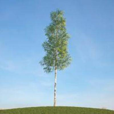 树, 树木