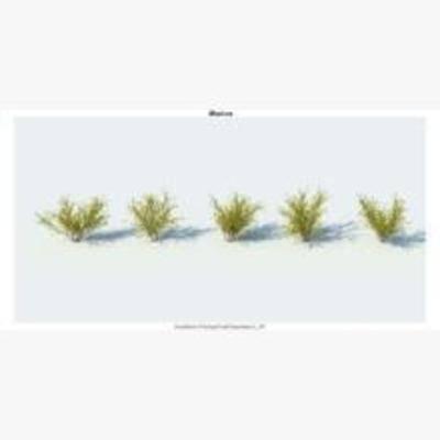 灌木, 花卉, 植物