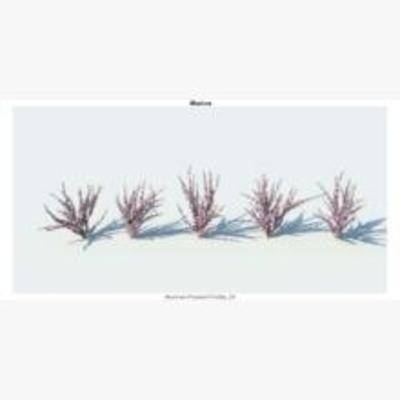植物, 灌木