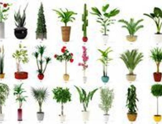 盆栽, 观赏花草, 植物, 花草树木, 家居盆景, 现代