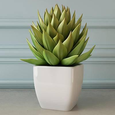 花卉盆栽植物, 多肉植物, 盆栽装饰品, 盆景, 盆栽, 现代