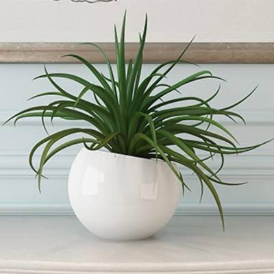 花卉盆栽植物, 吊兰, 盆栽装饰品, 盆景, 盆栽, 现代