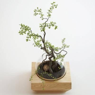 花卉盆栽植物, 现代千亿国际app 娱乐网站盆栽植物, 现代, 盆栽, 、