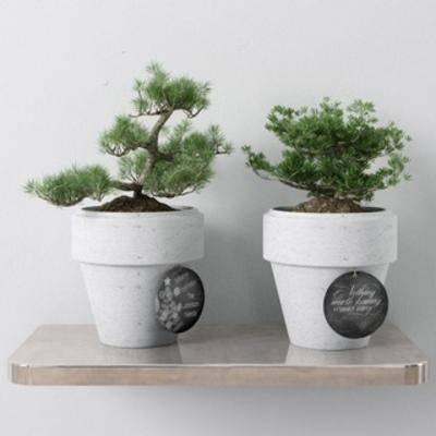 花卉盆栽植物, 现代, 简约, 盆栽, 植物