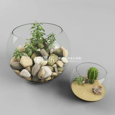 花卉盆栽植物, 摆设品, 现代, 盆栽, 植物