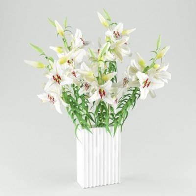 花卉盆栽植物, 摆设品, 花瓶, 装饰品, 植物