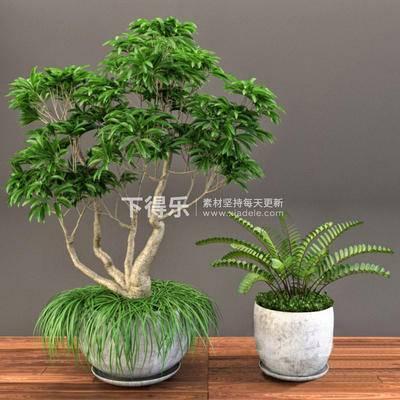 花卉盆栽植物, 摆放品, 装饰品, 盆栽, 植物, 现代