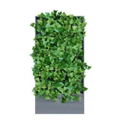国外模型, 植物墙, 装饰品