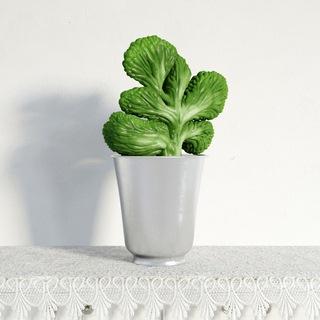 盆栽植物种植单体画法