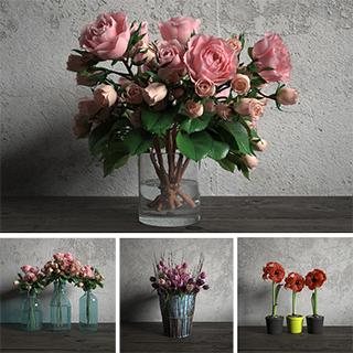植物,花卉,模型合集,花卉盆栽植物