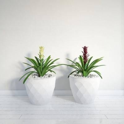花卉盆栽植物, 盆栽, 植物, 现代