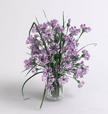 花卉盆栽植物, 花瓶, 植物, 现代