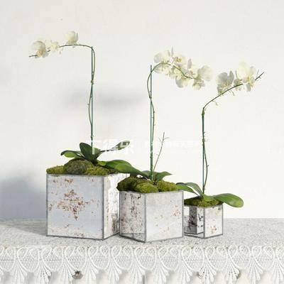 国外模型, 花卉盆栽植物, 盆栽, 植物, 现代