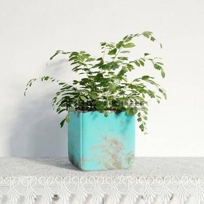 国外模型, 花草, 现代, 盆栽, 植物