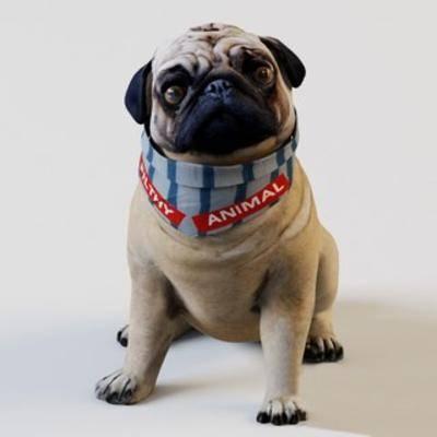 宠物, 国外模型, 狗, 动物