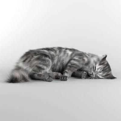 猫, 宠物, 国外模型, 动物