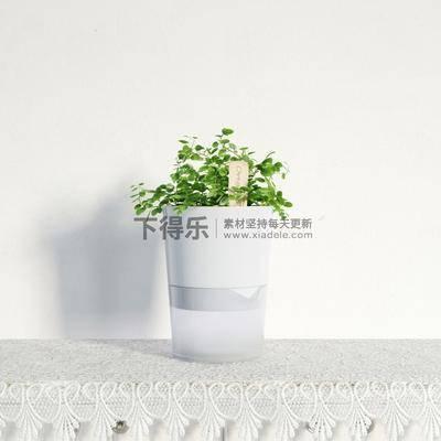 国外模型, 花草, 现代, 简约, 盆栽, 植物