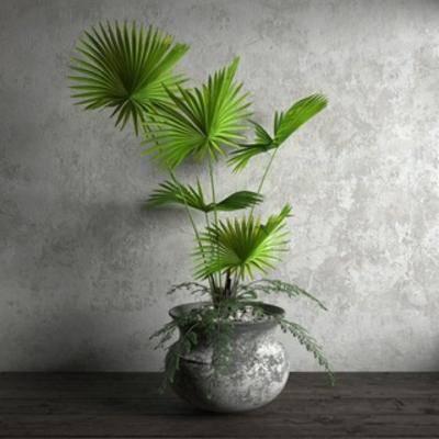 现代盆栽, 国外模型, 现代简约, 盆栽, 植物, 现代