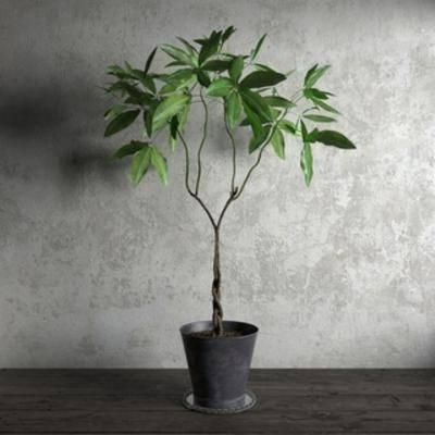 现代盆栽, 国外模型, 花草, 现代简约, 现代, 盆栽, 植物, 扮家家-积分兑换300套模型【一】