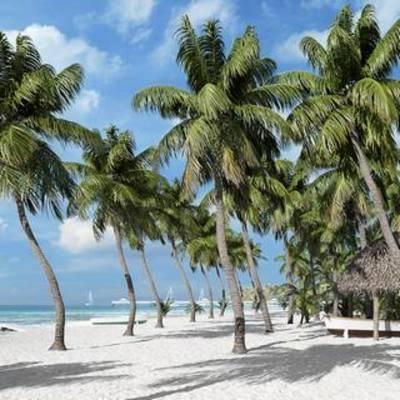 沙滩, 空间, 室外建筑, 现代, 海边, 树木