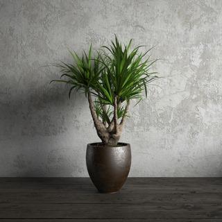 盆栽,国外模型,现代盆栽,现代植物