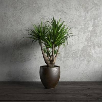 现代植物, 现代盆栽, 国外模型, 盆栽, 现代