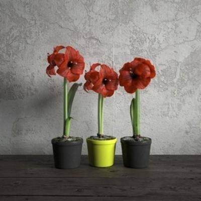 现代植物, 现代盆栽, 国外模型, 盆栽, 植物, 现代