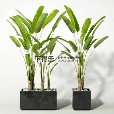 现代植物, 现代盆栽, 现代盆栽植物, 盆栽, 植物, 现代