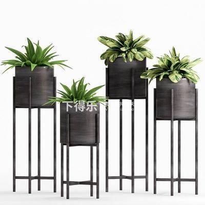 现代植物, 现代盆栽, 盆栽, 植物, 现代