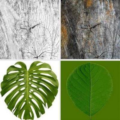 树根, 树叶, 贴图