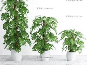 盆栽.植物, 现代植物, 现代盆栽