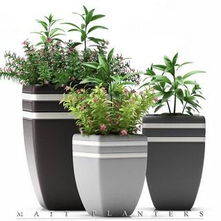 现代盆栽植物